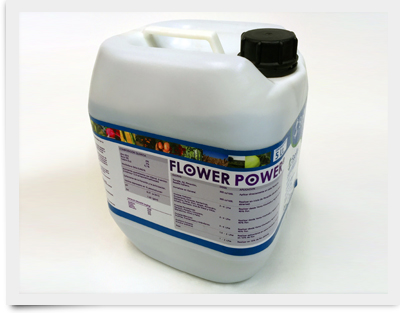 Producto_GMT_flower-power